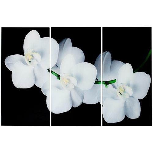 Картина White Orchidee 60x30cm (Z36004) белая Invicta