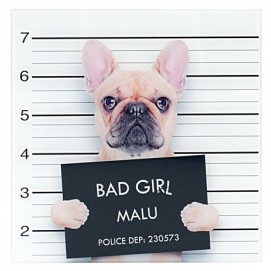 Картина Bad Girl 40x40cm Franz. Bulldogge Glas/ 35983 белая Invicta