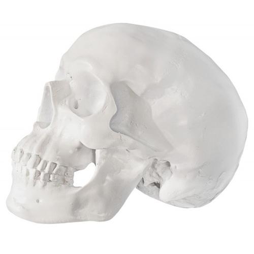 Копилка Skull 20cm белая/ 36363 Invicta