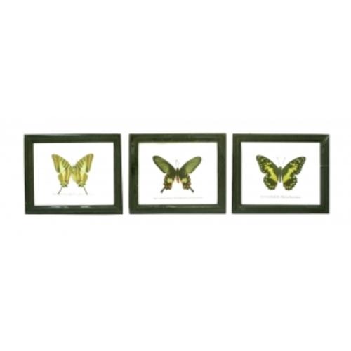 Бабочка в рамке, в ассортименте (б-19)