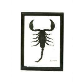 Скорпион в черной рамке (с-173)